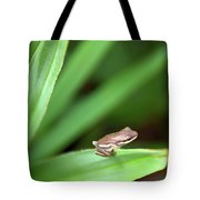 Tiny Tree Frog 01110 Tote Bag