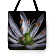 Tiny white flower oil painting photograph by robert storost tiny white flower oil painting tote bag mightylinksfo