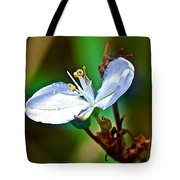 Tiny White Wildflower In Vicente Perez Rosales National Park Near Puerto Montt-chile  Tote Bag