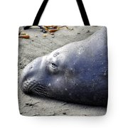 Tired Seal Tote Bag