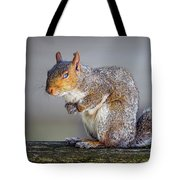 Tired Squirrel And Fly Tote Bag