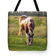 Tobiano Horse In Field Tote Bag
