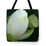 Today And Yesterday Tote Bag