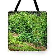 Tomatoes In Garden 2906t Tote Bag