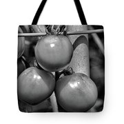 Tomatoes On The Vine Bw Tote Bag
