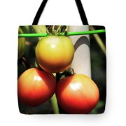 Tomatoes Ripening On The Vine Tote Bag