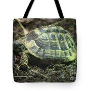Tortoise Photobomb Tote Bag
