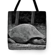 Tortoise Relaxing Tote Bag