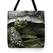 Tortoise's Stare Tote Bag