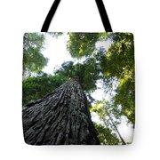 Towering California Redwood Trees Tote Bag