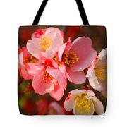 Toyo-nishiki Quince Blooms Tote Bag