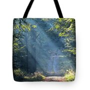 Trail In Morning Light Tote Bag