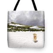 Traildog At Kingston Peak Snow Field Tote Bag