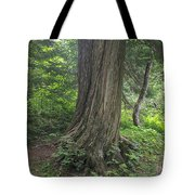 Trails Tote Bag