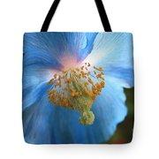 Translucent Blue Poppy Tote Bag by Carol Groenen