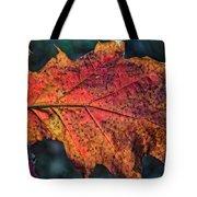 Translucent Red Oak Leaf Study Tote Bag