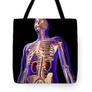 Transparent View Of Human Body Showing Tote Bag