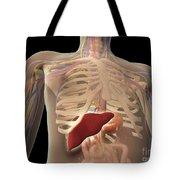 Transparent View Of Human Torso Showing Tote Bag
