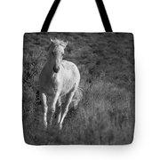 Traveler Bw Tote Bag