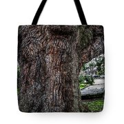Treaty Oak 12 14 2015 039 Tote Bag