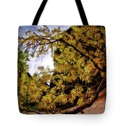 Tree Along Zion Riverside Walk Tote Bag