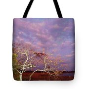 Tree And Sky At Cape May Point State Park  Nj Tote Bag