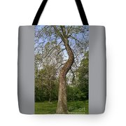 Tree At Botanical Gardens Tote Bag