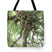 Tree At Ming Tombs Tote Bag