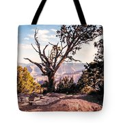 Tree At Moran Point Tote Bag
