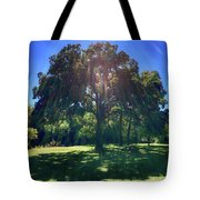 Tree Bathed In Sun Tote Bag