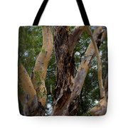 Tree Branch Texture 1 Tote Bag