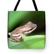 Tree Frog Close-up 01110 Tote Bag