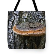 Tree Fungus 4 Tote Bag