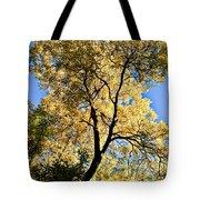 Tree In Fall Tote Bag