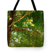 Tree In Late Summer Tote Bag