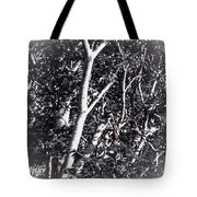 Tree In Summer In Black And White Tote Bag