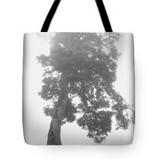 Tree In The Fog Tote Bag
