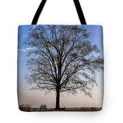 Tree In The Morning Light Tote Bag