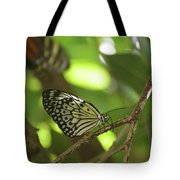 Tree Nymph Butterfly Sitting On A Tree Branch Tote Bag