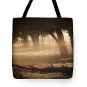 Tree Row In Morning Fog Tote Bag