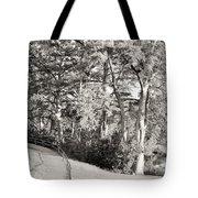 Tree Shaded Walkway Tote Bag