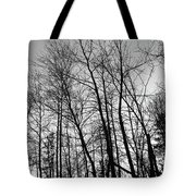 Tree Silhouette Bw Tote Bag
