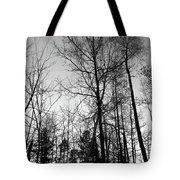 Tree Silhouette II Bw Tote Bag