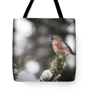 Tree Snow Sitter Tote Bag