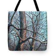 Tree Study Tote Bag