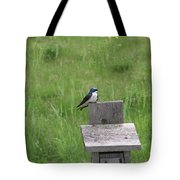 Tree Swallow 1 Tote Bag