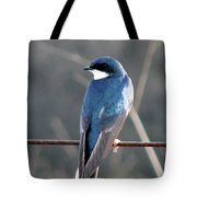 Tree Swallow Tote Bag