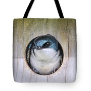 Tree Swallow In Nest Box Tote Bag