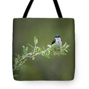 Tree Swallow Male Tote Bag