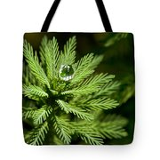 Tree Top Dew Drop Tote Bag